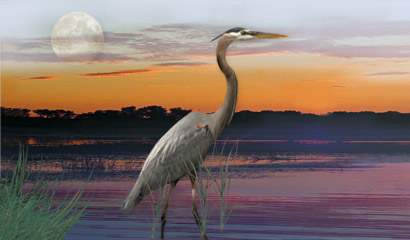 Blue Heron Healing Art